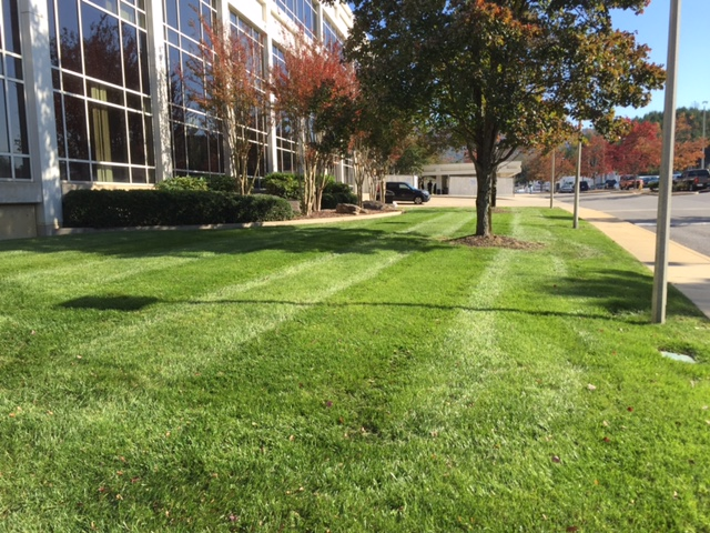 Commercial Landscape Maintenance Citygreen Services